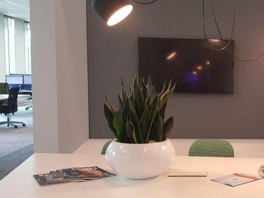 Duoplant kantoor beplanting